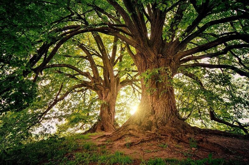 緑色の自然からイメージできること