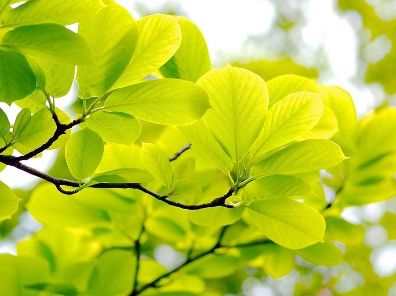 スプリンググリーン(春の緑)は軽やかさをイメージさせます