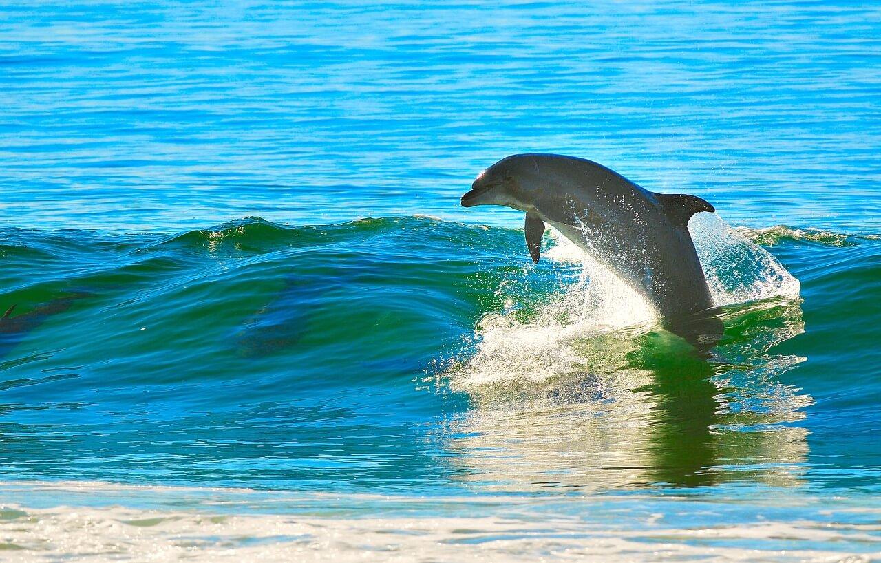 ターコイズは海とイルカの自由性の色