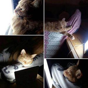 光療法を受ける動物
